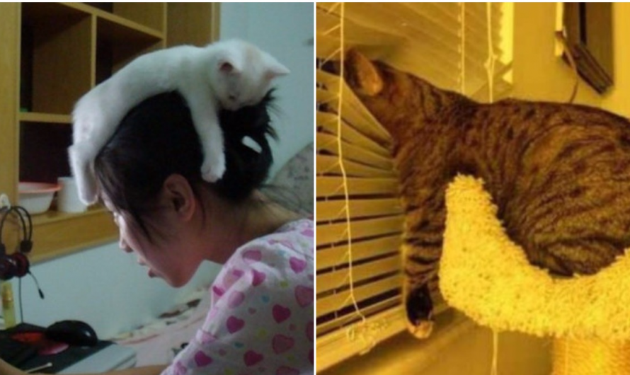 30 Pics That Prove Cats Can Sleep Practically Anywhere.
