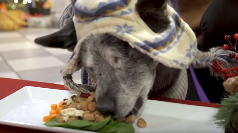 30 homeless pets have a holiday feast and feeling love for the first time