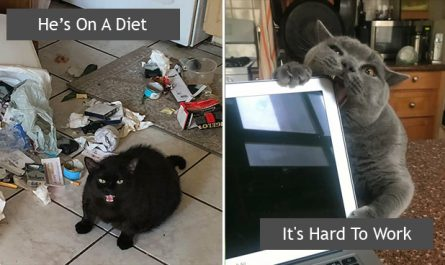50 Funny Photos That Prove Cats Are The Biggest Jerks