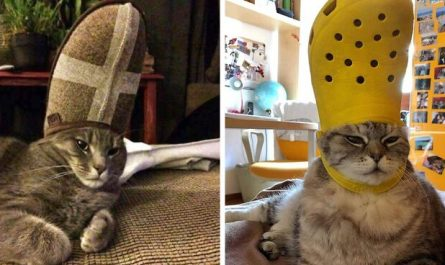 A Slipper On Your Pet's Head Can Make Them Look Like The Pope, And Here Are 30 Pics To Prove It