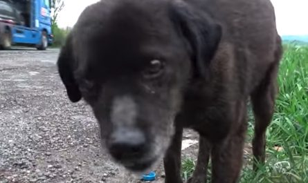 Abandoned Canine Remained On The Side Of The Busy Street As Cars Zoomed Past.