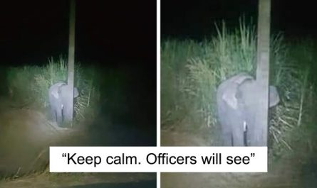 Adorable Baby Elephant Gets Caught Eating Sugarcane, Tries To Hide Behind A Narrow Light Pole
