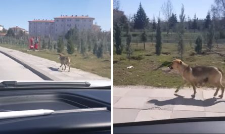 Guy Finds Dog Carrying A Bowl Down The Road And Follows Her