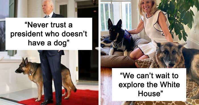 Joe Biden's Dogs Have Twitter And Instagram Accounts And Also The Content Is Wholesome.
