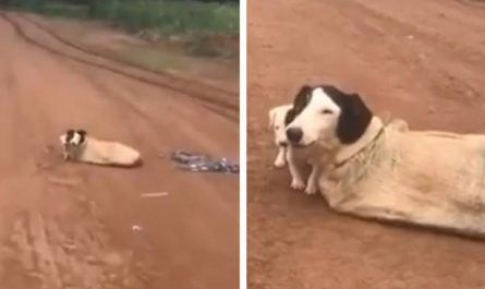Mama Dog And Her Puppies Locate Tied Up In A Sack In The Middle Of No place