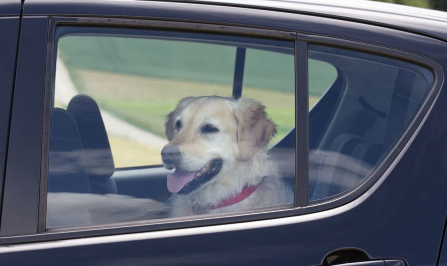 Officer punishes woman who left dog to sit in hot car by ordering her do the same.