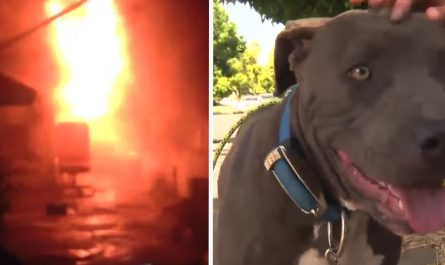 Pit Bull Is Seen Dragging Baby By The Diaper, Turns Out The House Is On Fire