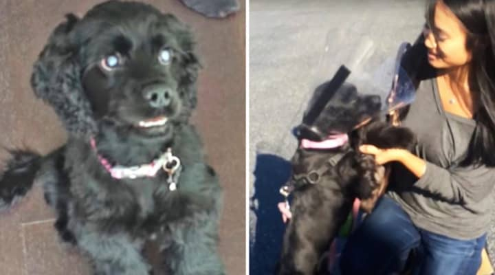 Recently Blind Puppy Gets Her Sight Back Sees Her Owners For The 1st Time After Surgery.