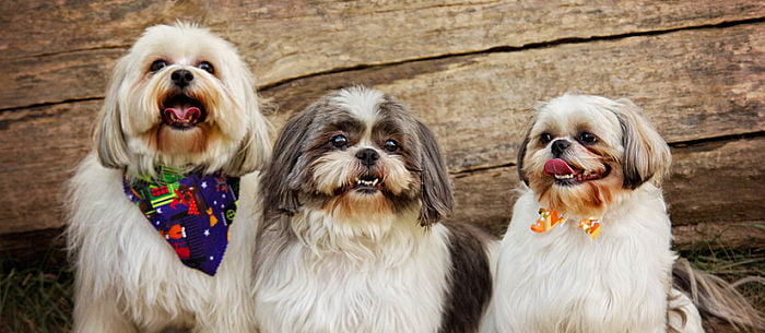 Top 10 Cutest Mixed Breed Canines.