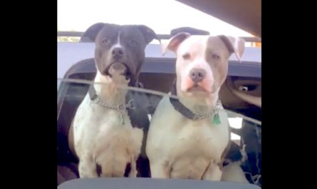 Woman Rolls Down Home Window To Say Hi To Dogs At Traffic Stop, One More Friend Pops Up