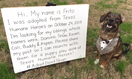 Dog dresses up and also requires to Facebook in look for adopted brother or sisters