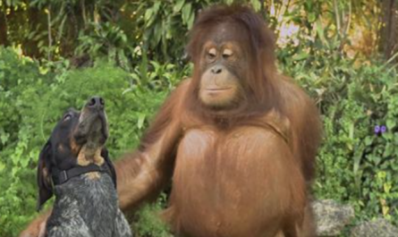 Everybody On Earth Must See This 1 Minute Animal Video Clip