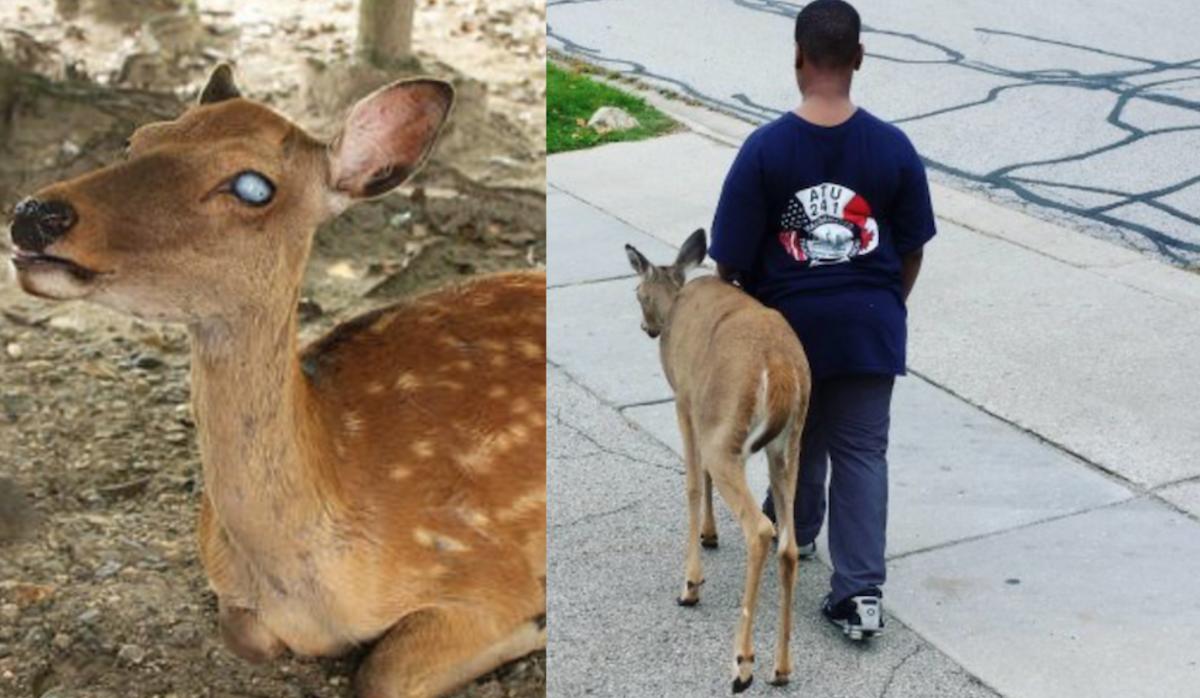 Little Kid Seen Helping Blind Deer Every Morning Before School