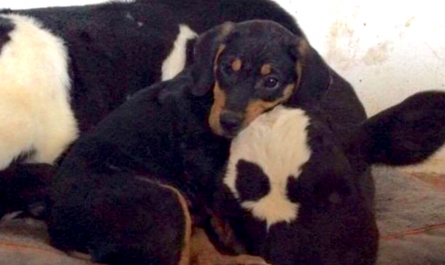 Puppy Found In The Woods Forms Bond And Makes A Brand new Friend