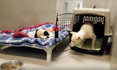 Rescue Dog Hesitant To Leave Dog Crate And Take First Step Towards New Life