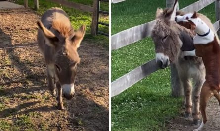 Shy Donkey Who 'Does Not Like People Or Dogs' Meets Pit Bull Who Changes Everything
