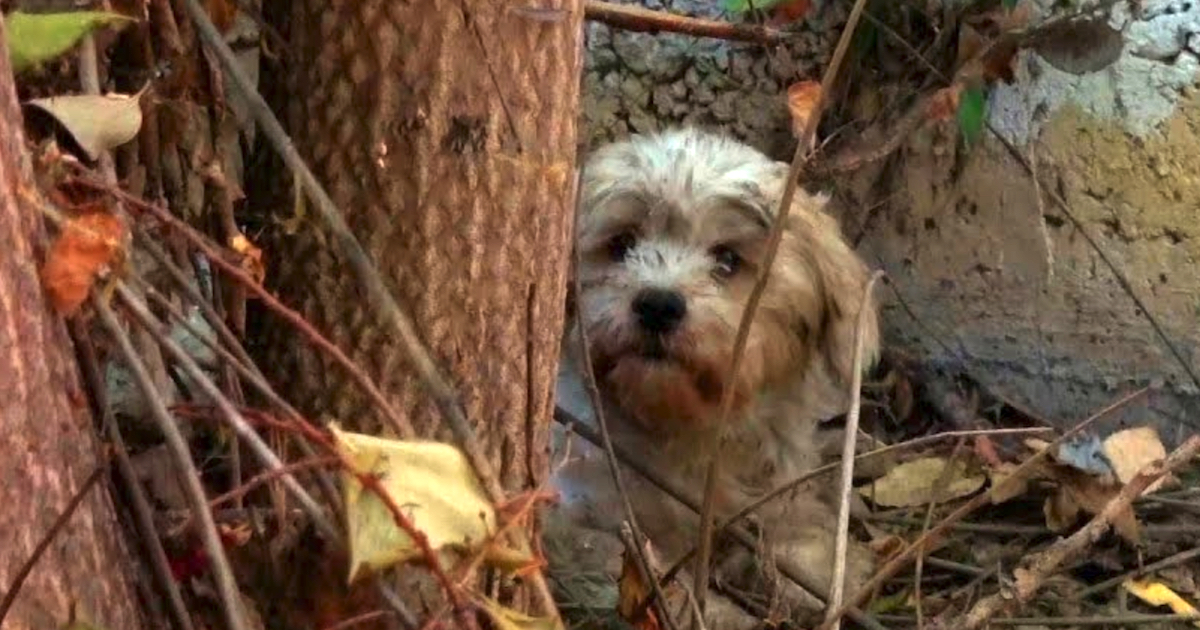 Terrified Homeless Dog Hid Behind A Dumped House Surrounded By Spiders