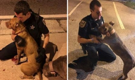 Cops Sit And Comfort Two Pit Bulls In The Street As They Await Help