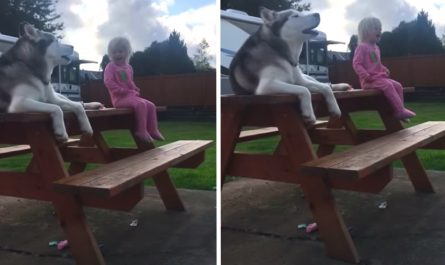 Dog And Little Girl Have Discussion In Their Own Language