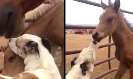 Mama Horse Allows Dog To Make Friends With Her Little One