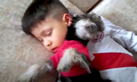 Playtime In Between A Little Kid And His New Dog Comes To A Lovable End