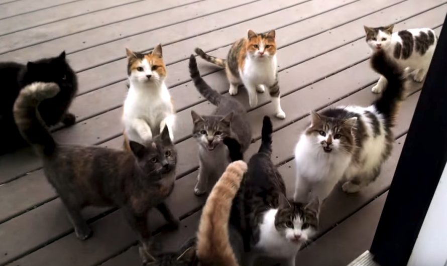Every Morning, This Man Opens His Door To A Deck Filled With Demanding Cats