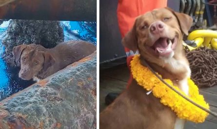 Lost Dog 130 Miles Far From Coast Is Exhausted When Found By Oil Rig Workers