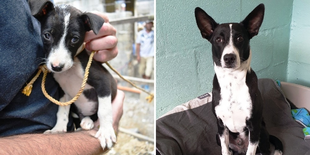 Puppy That Was Tied To A Pole His Whole Life Sees Grass For The First Time