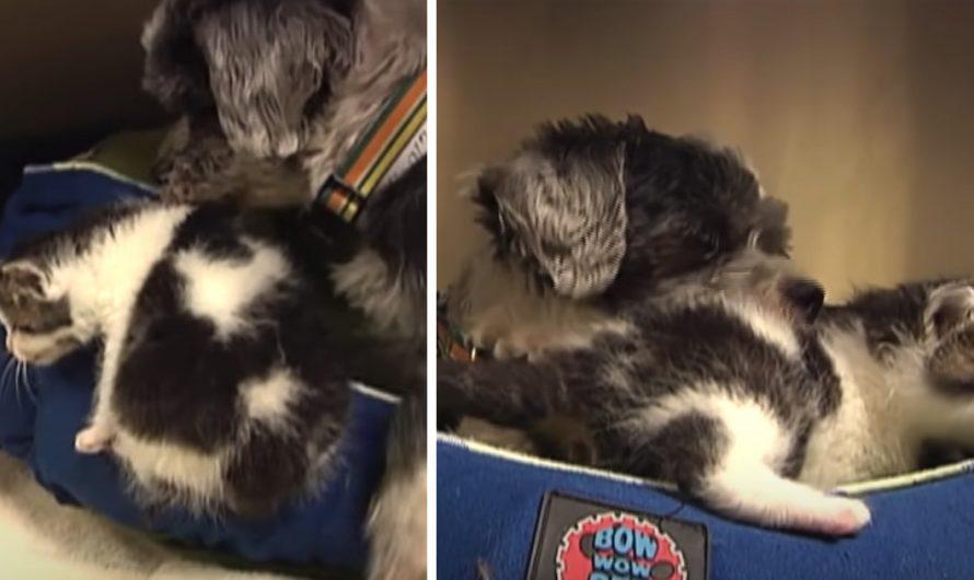 Stray Dog Found In A Ravine Nursing A Kitty To Keep It Alive