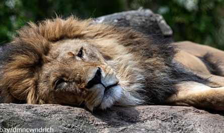 30 Lions Euthanized After Owner Rejected To Help When Fire Ravaged Enclosure