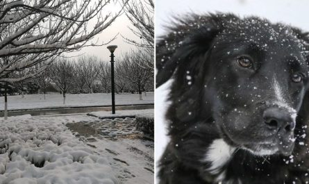 87 Year Old Lady Saved By Neighbor's Dog After Falling Down In The Snow
