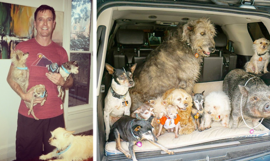 A Kind Man Visits Animal Shelters And Adopts All The Old Dogs That No One Needs