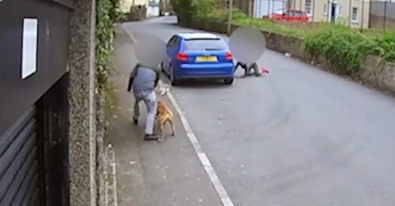 Camera Catches Teenagers Fooling Elderly Cat Into Being Mauled By Their Dog