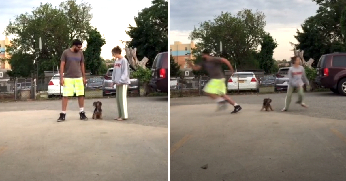 Canine Passes The Runaway Challenge To See Which Owner She Enjoys One Of The Most