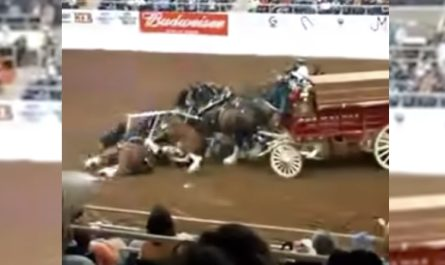 Clydesdales Tumble And Pile Up Throughout A Show, And Also The People Gasps In Unison