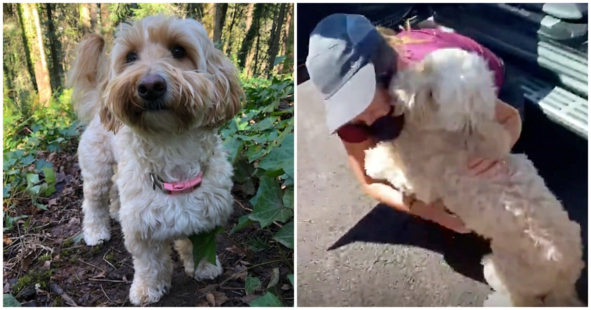 Dog Makes It Through 9 Days In Woods Surrounded By Cougars and Bears After Falling Off Cliff
