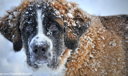 Dying Dog Takes Pleasure In Snow One Last Time Thanks To Local Ice Rink
