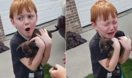 Grandmother Adopts A Pup For Her Grand Son Who Was Saving Up To Purchase One