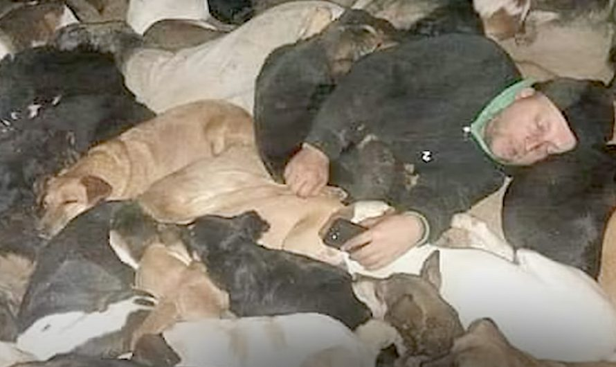People Keep Abandoning Dogs At His Door, So He Sleeps With Them In The Cold