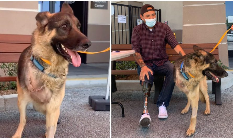 Rescue Dog With One Leg Amputated Adopted By A Veteran Who Has The Exact same Injury