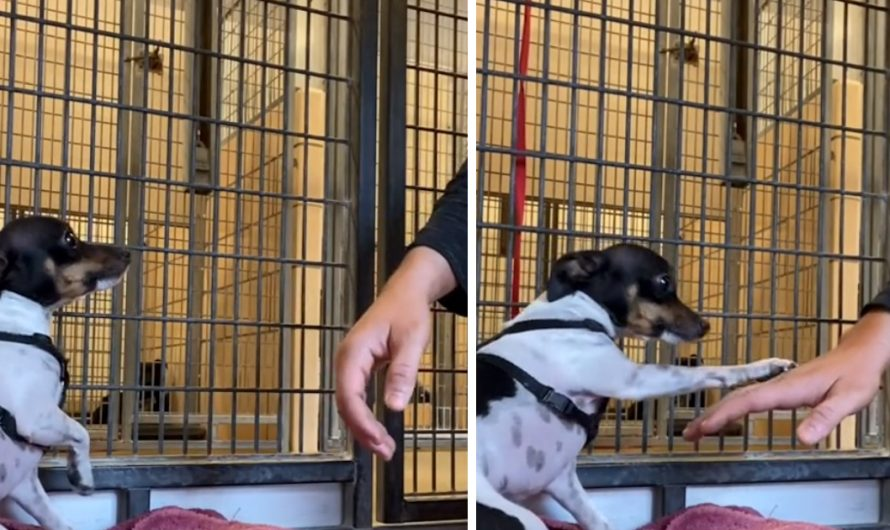 Shaking Shelter Dog Locates A Person He Can Trust And Offers A Paw