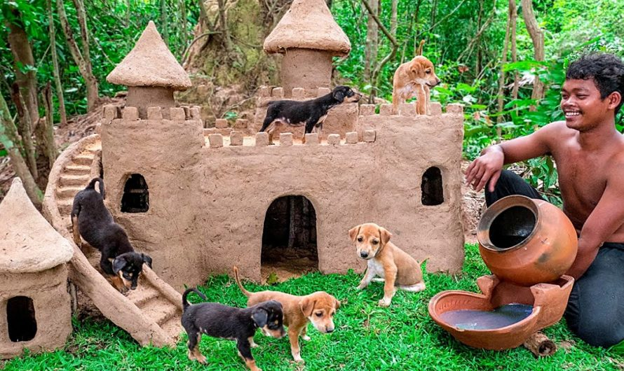 Thailand Man Saves Abandoned Puppies and Builds Castles For Them To Live In