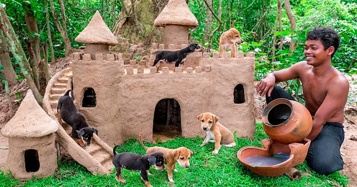 Thailand Man Saves Abandoned Puppies & Builds Castles For Them To Live In