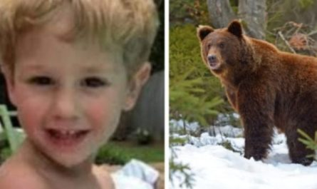 The 3 Year Old Kid Who Survived 2 Freezing Nights Claims That A Bear Helped Keep Him Warm